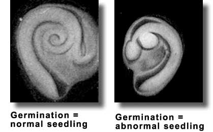 seed priming technique Seed priming is a simple pre-germination method to improve  optimization of priming technique is important to determinate the optimal soaking duration and the.