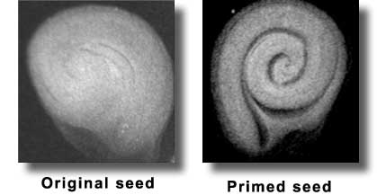 seed priming technique Keywords: soybean, seed priming, priming duration, germination, osmotic potential introduction in fact, this technique is a treatment that applied.
