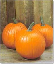 How to pick the perfect pumpkin to pick at the pumpkin patch:  Photo of a Magic Lantern pumpkin  a traditional-looking pumpkin/Marvelousmusings